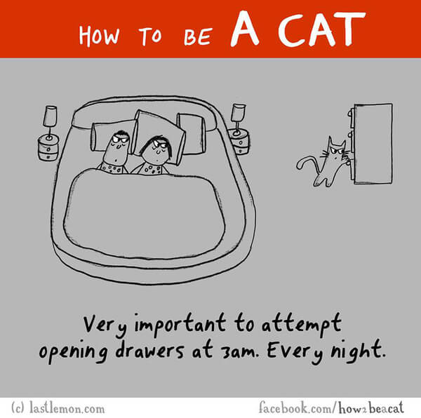 how cats act 9