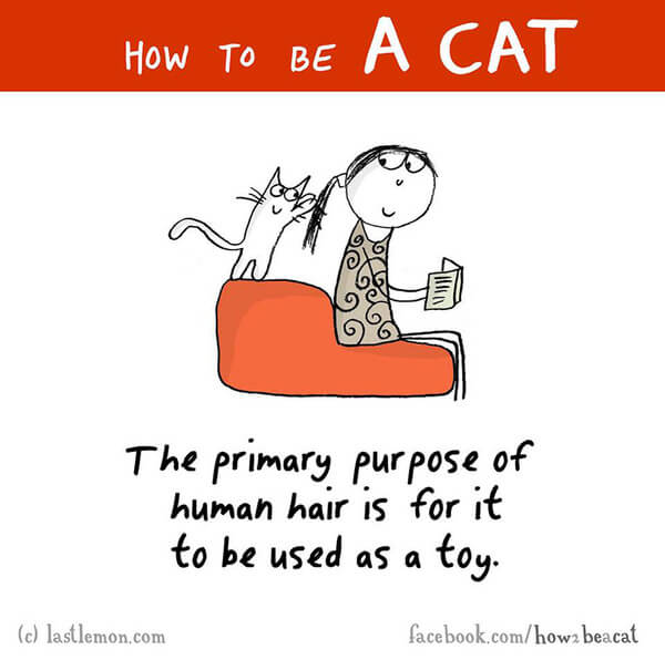 Communication on this topic: How to Sneak Your Cat Into Work, how-to-sneak-your-cat-into-work/