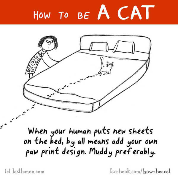 how to be a cat guide 24