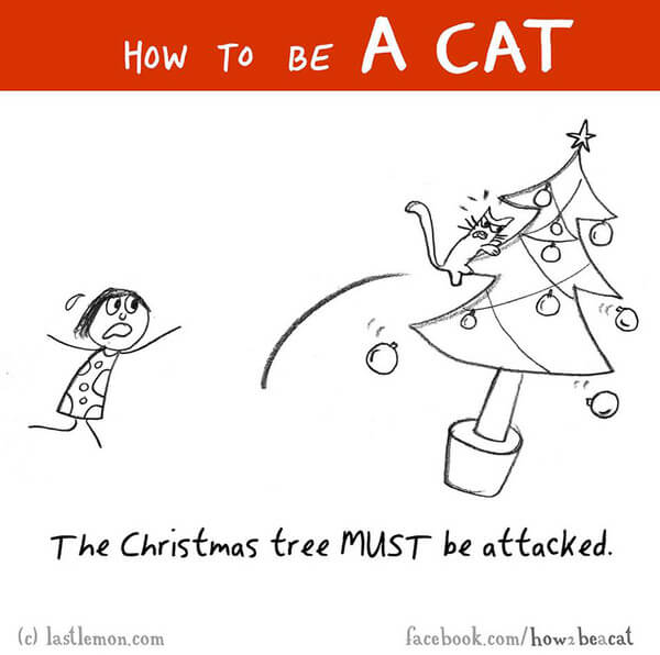 how to be a cat guide 23
