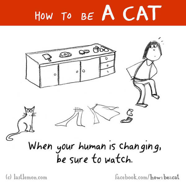be a cat guide 17