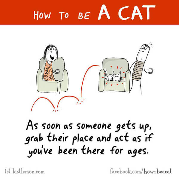 how to act like a cat 4