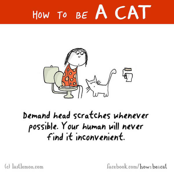 how to act like a cat 8