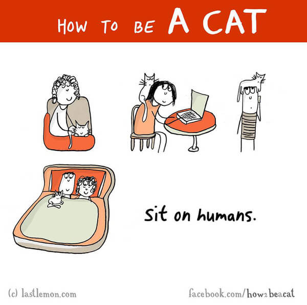 how cats act 13