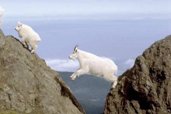 mountain goats climb 6
