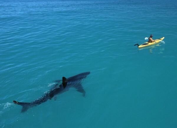 do you fear the sea? 1
