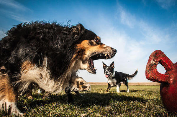 photos that turn dogs into giants 3