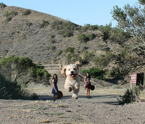 photos that turn dogs into giants 1