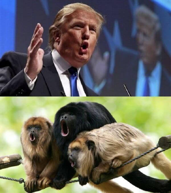 Donald trump looks like 9