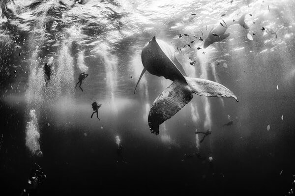 winning shots from national geographic contest 2