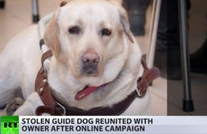 Massive Online Campaign Helps Bringing A Guide Dog To Blind Owner. 2