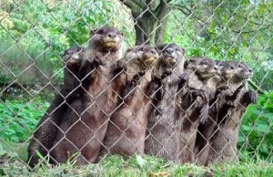 3741166_these-otters-are-waiting-for-their-favorite_60bf92ca_m