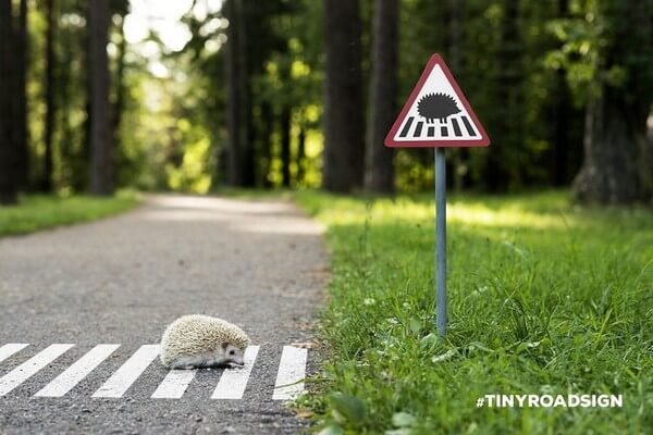 tiny road signs for animals 5