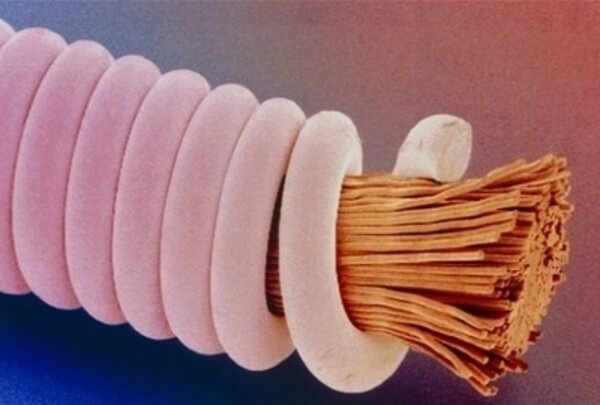 everyday objects under microscope 49