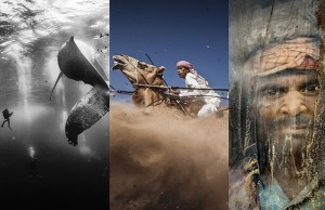 winning shots from national geographic contest 1