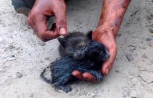 man saves kittens 27