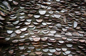 coin wishing trees 1
