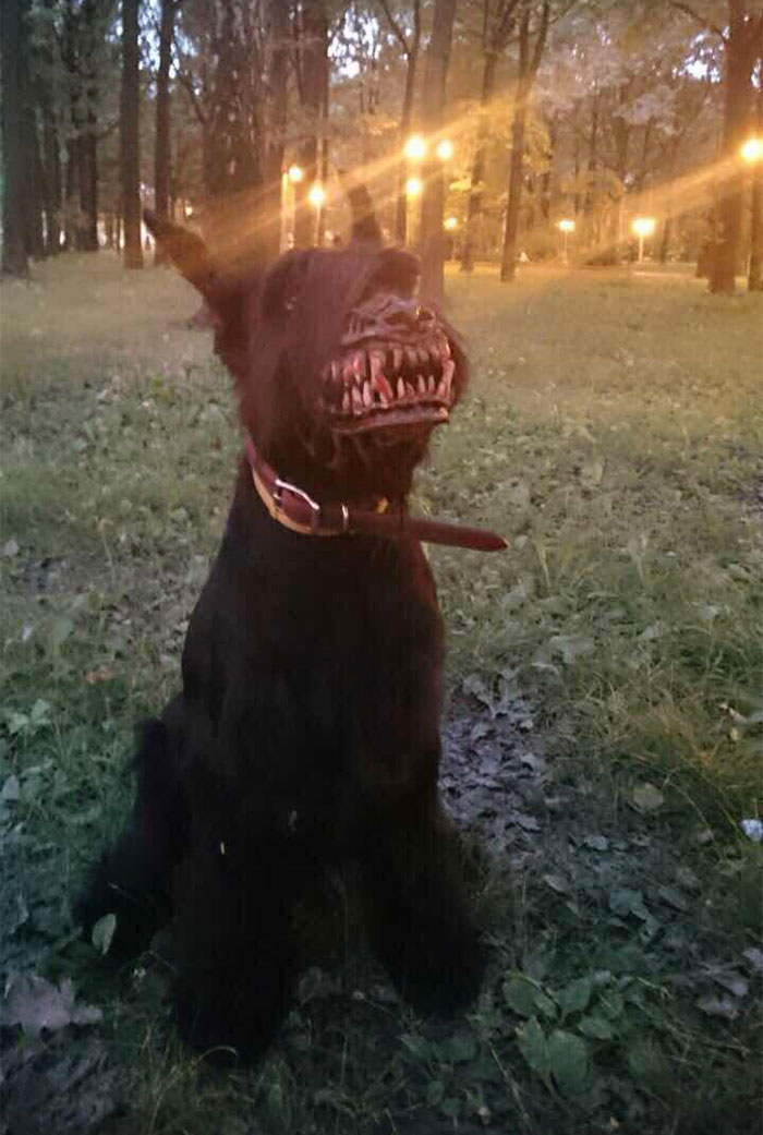 muzzle for dogs 1
