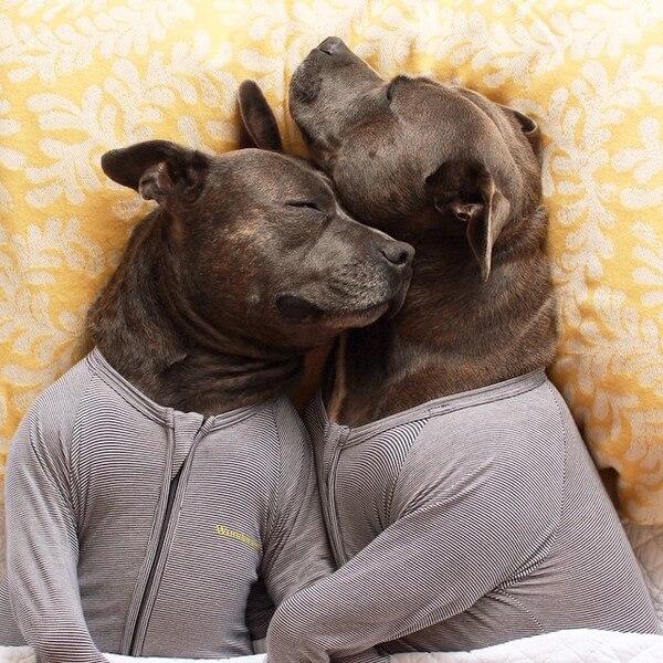 DARREN AND PHILLIP - adorable bull terriers 3