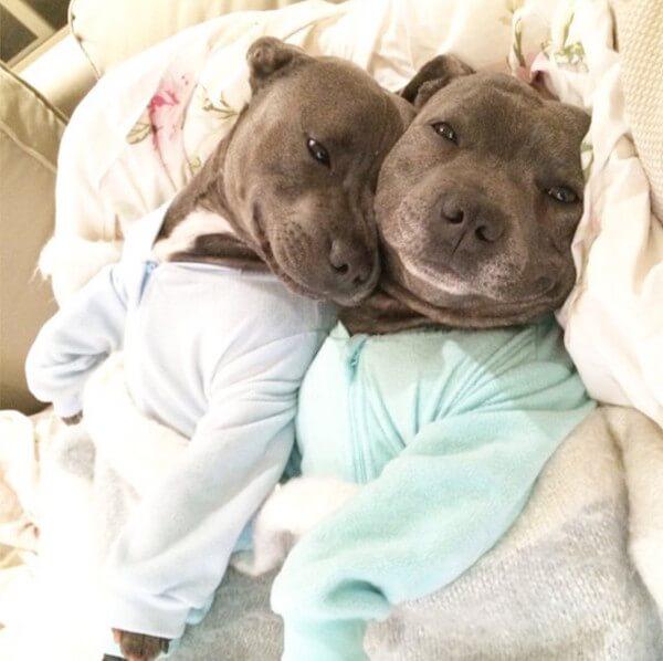 These Pups Love Cuddling While Wearing Pyjamas Thank You