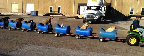 adorable dog train 4
