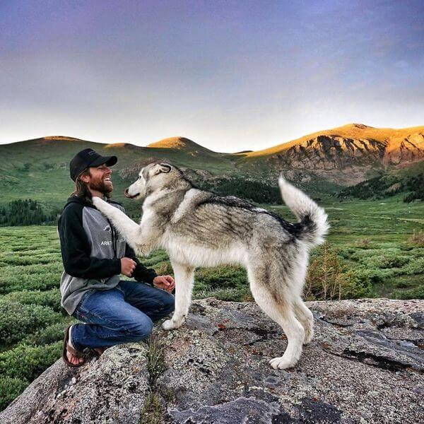 Loki the Wolfdog 11