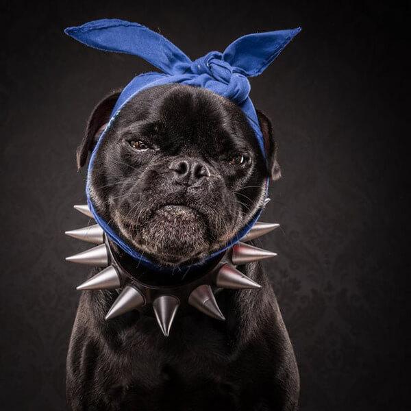 the pug life 6