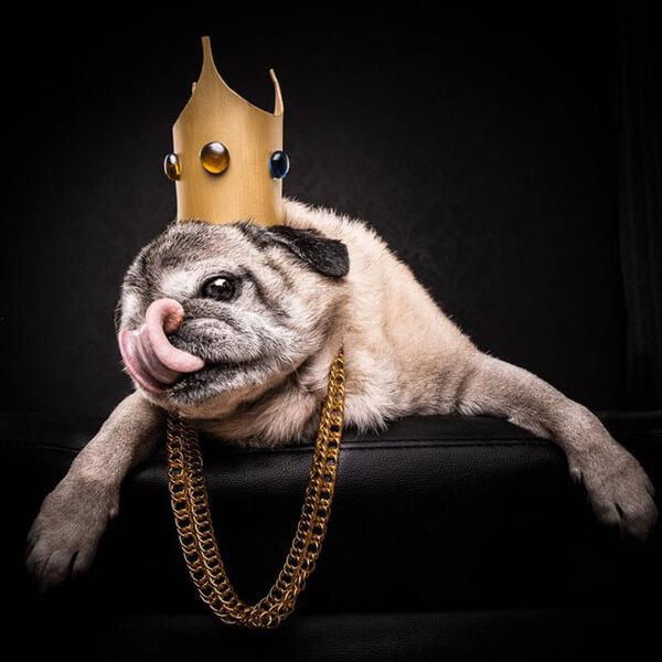 the pug life 7