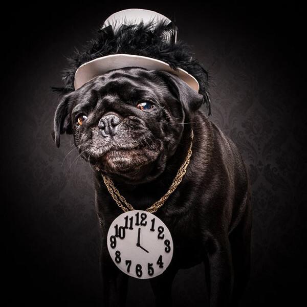 the pug life 3