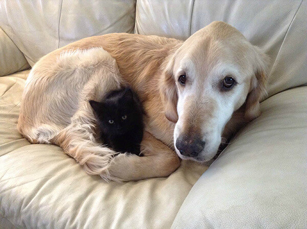 cats and dogs together 10