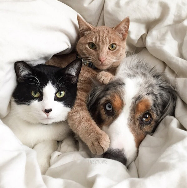 cats and dogs together 13