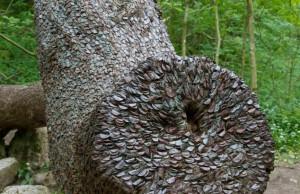 coin wishing trees 2