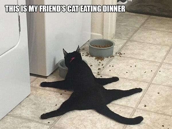 funny cat logic 1