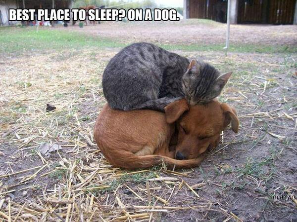 funny cat logic 5