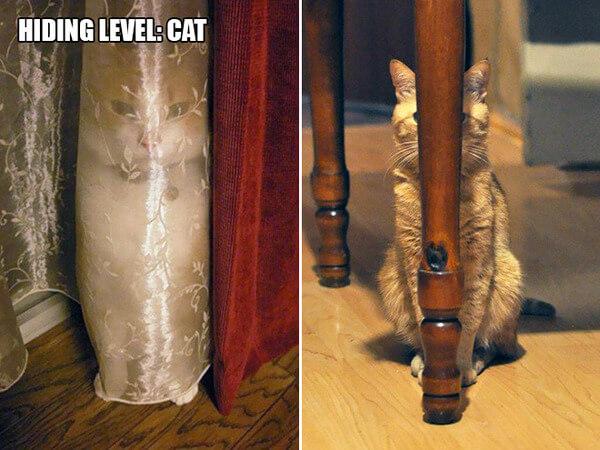funny cat logic 8