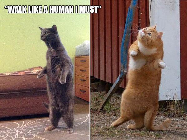 funny cat logic 6