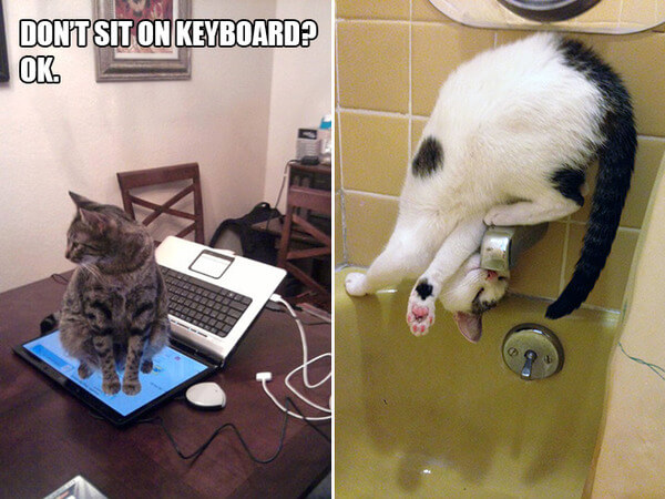 funny cat logic 16