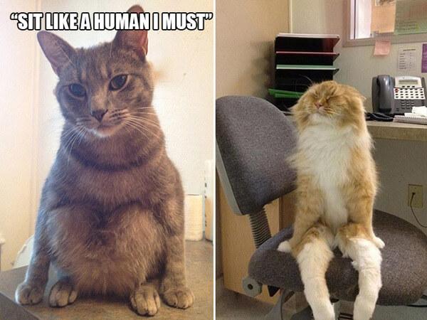 funny cat logic 12