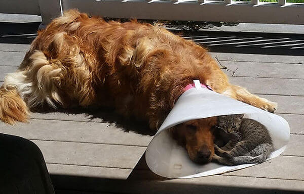 cats and dogs together 1
