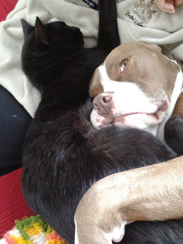 cats and dogs together 14