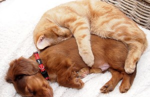 cats and dogs together 6