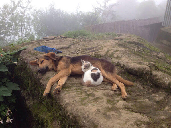 cats and dogs together 12