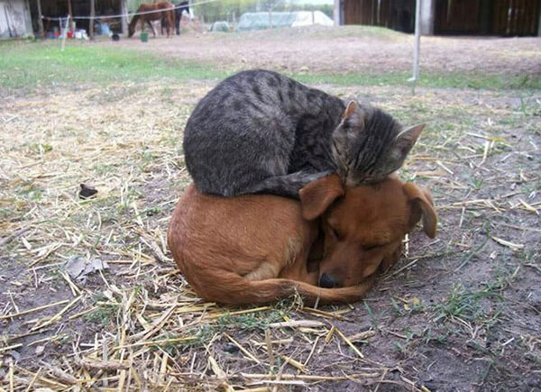 cats and dogs together 5