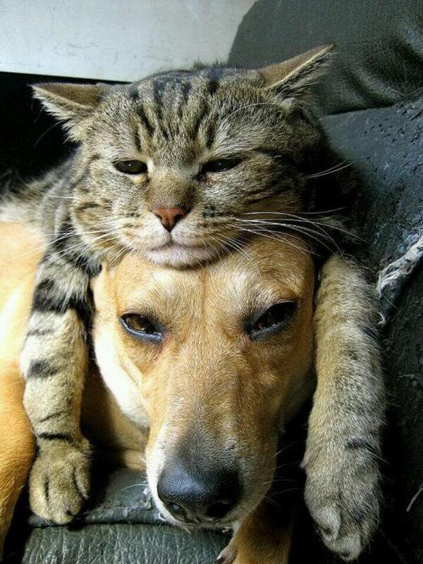cats and dogs together 11