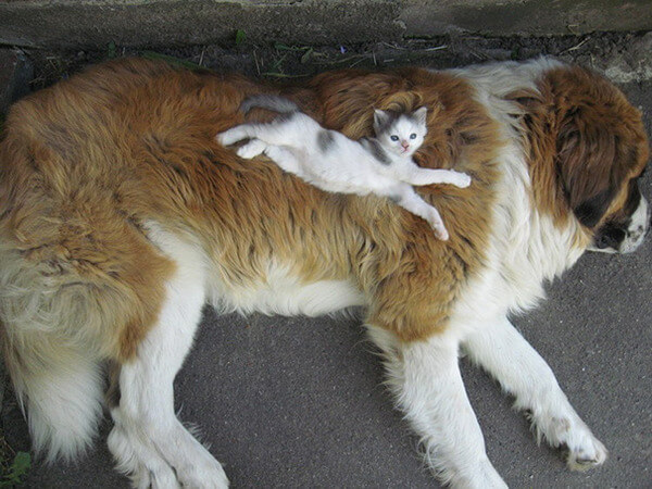 cats and dogs together 7