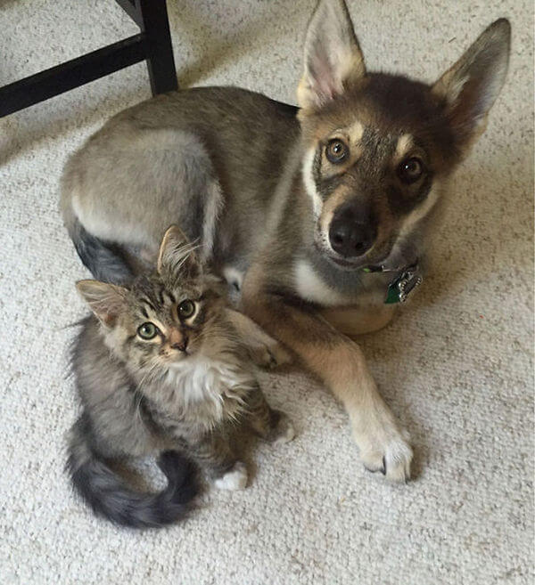 cats and dogs together 15