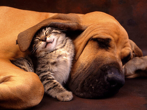 cats and dogs together 2