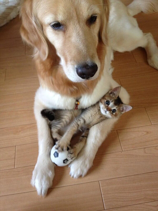 cats and dogs together 8