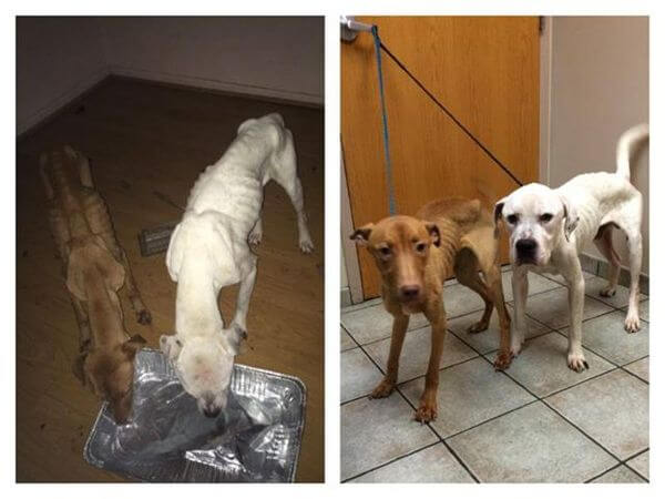 abandoned dogs survive 2