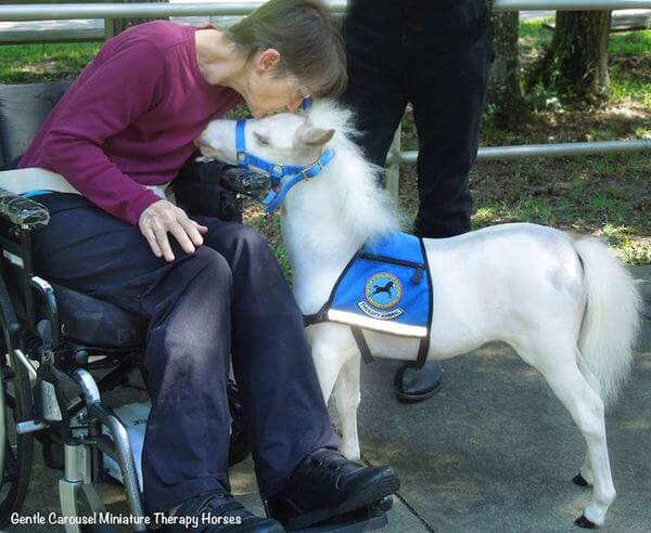 Magical Miniature Horses Provide Therapeutic Benefits For